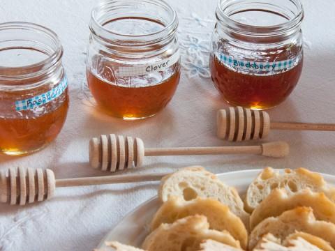 honey-tasting