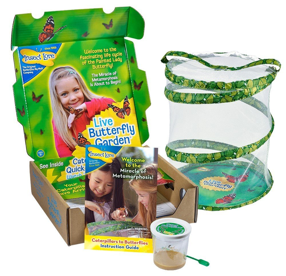 Insectlore Butterfly Kit